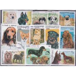 100 Cães Diferentes