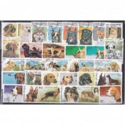 200 Cães Diferentes