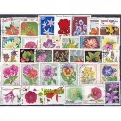 200 Flora Diferentes